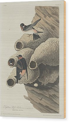 Republican Cliff Swallow Wood Print by Rob Dreyer