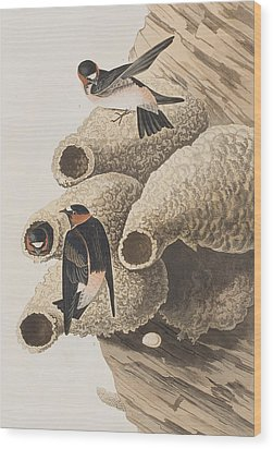 Republican Or Cliff Swallow Wood Print by John James Audubon
