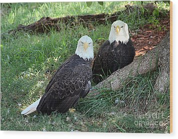 Wood Print featuring the photograph Resting Bald Eagles by Sheila Brown
