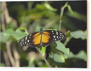 Resting Butterfly Wood Print by Sven Brogren