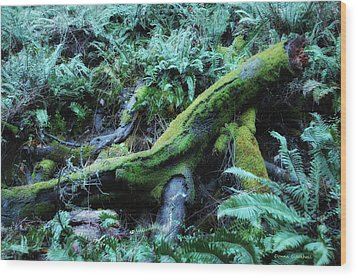 Resting Comfortably Wood Print by Donna Blackhall