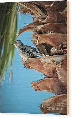 Wood Print featuring the photograph Resting Mockingbird by Robert Bales