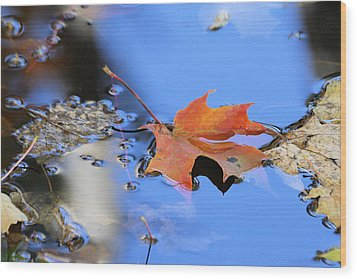 Wood Print featuring the photograph Resting On Gold And Blue by Doris Potter