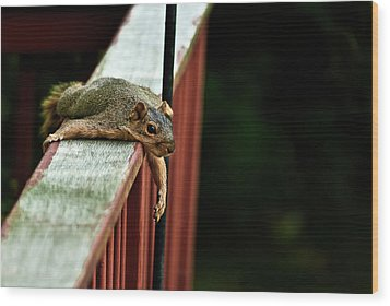 Resting Squirrel Wood Print