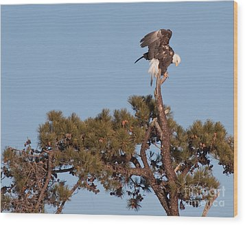 Restless Eagle Wood Print by David Bishop