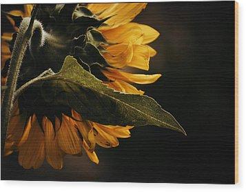 Wood Print featuring the photograph Reticent Sunflower by Douglas MooreZart