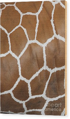 Reticulated Giraffe #2 Wood Print
