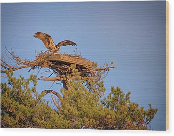 Wood Print featuring the photograph Returning To The Nest by Rick Berk