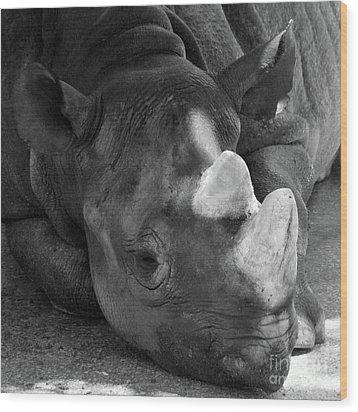 Rhino Nap Wood Print