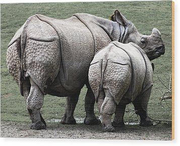 Rhinoceros Mother And Calf In Wild Wood Print by Daniel Hagerman