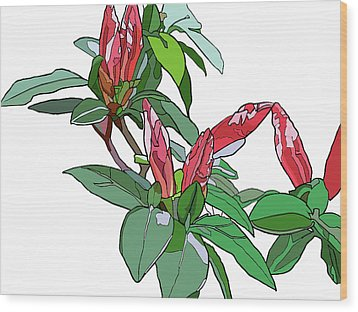 Rhododendron Buds Wood Print by Jamie Downs