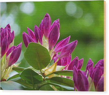 Rhododendron Buds Wood Print by MTBobbins Photography