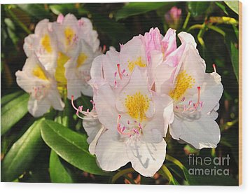 Rhododendron Wood Print by Catherine Reusch Daley