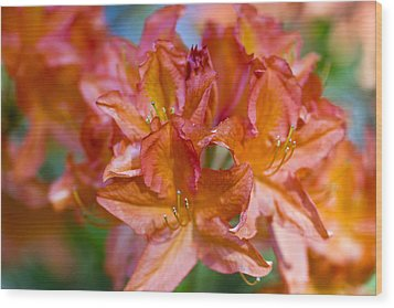 Rhododendron Flowers Wood Print by Frank Tschakert