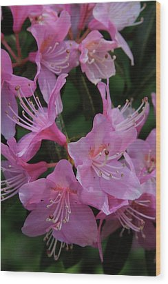Rhododendron In The Pink Wood Print by Laddie Halupa
