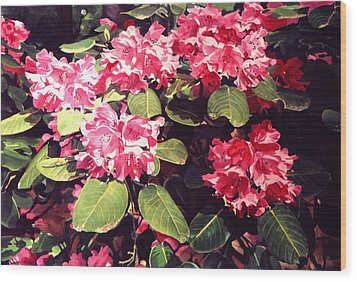 Rhododendrons Rothschild Wood Print by David Lloyd Glover