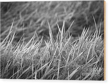 Rice Field Japan Wood Print by Arni Katz