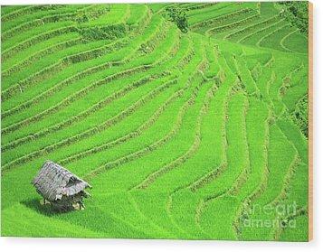 Rice Field Terraces Wood Print by MotHaiBaPhoto Prints