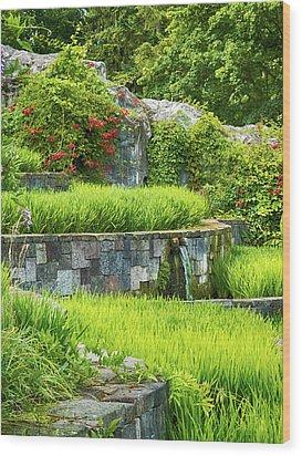 Rice Garden Wood Print by Wim Lanclus