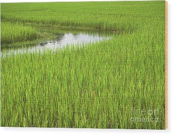 Rice Paddy Field In Siem Reap Cambodia Wood Print by Julia Hiebaum