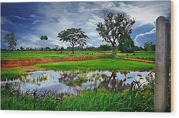 Rice Paddy View Wood Print