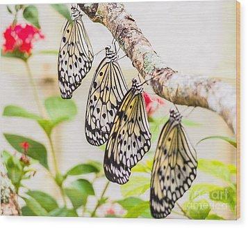 Rice Paper Butterflies Wood Print