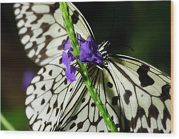 Rice Paper Butterfly Wood Print by JT Lewis