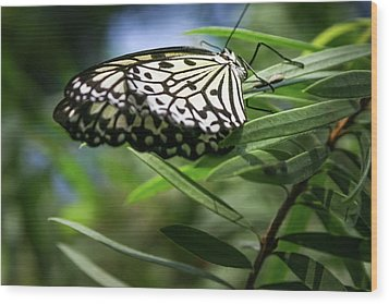 Rice Paper Butterfly - Wood Print
