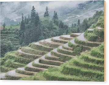 Wood Print featuring the photograph Rice Terraces by Wade Aiken