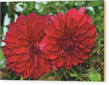 Rich Red Dahlias By Kaye Menner Wood Print by Kaye Menner