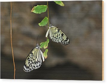 Wood Print featuring the photograph Right And Left Wings by Teresa Blanton