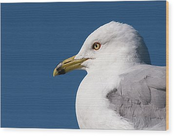 Ring-billed Gull Portrait Wood Print