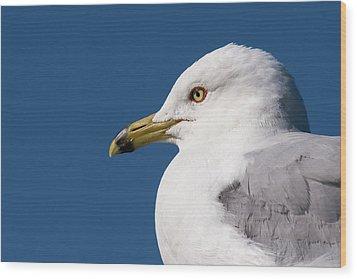 Ring-billed Gull Portrait Wood Print