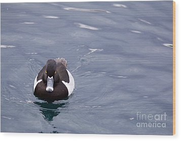 Ring-necked Duck Wood Print by Afrodita Ellerman