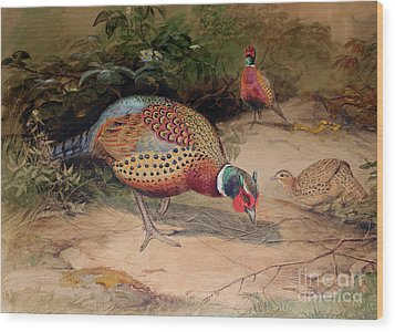 Ring Necked Pheasant Wood Print by Joseph Wolf