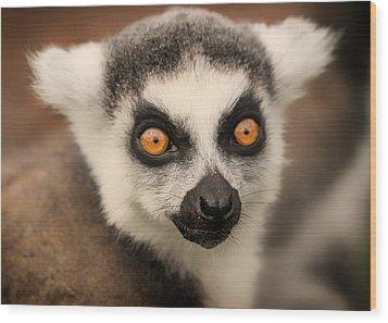 Wood Print featuring the photograph Ring Tailed Lemur Portrait by Chris Boulton