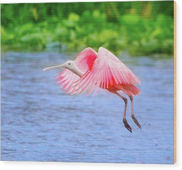 Rise Of The Spoonbill Wood Print by Mark Andrew Thomas