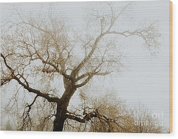Wood Print featuring the photograph Rising by Iris Greenwell