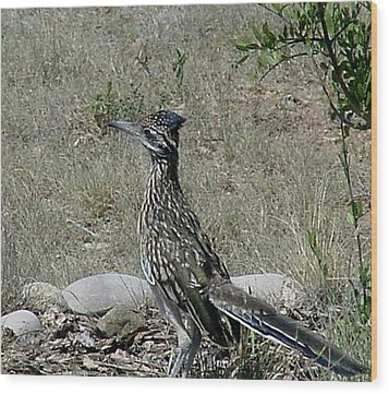 Wood Print featuring the photograph Rita Roadrunner by Fred Wilson