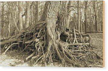 River Bank Oak Wood Print