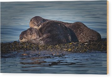 River Otters Wood Print by Randy Hall