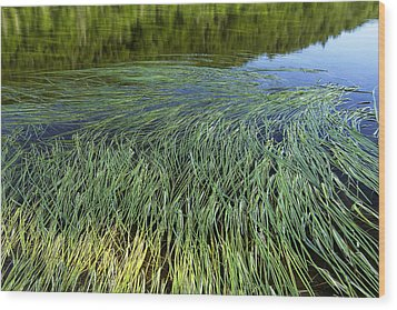 River Reeds Wood Print by Tom  Wray
