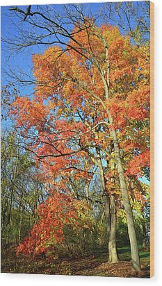 Wood Print featuring the photograph River Road Maples by Ray Mathis