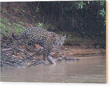 Wood Print featuring the photograph Riverbank Jaguar by Wade Aiken