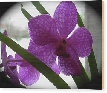 Wood Print featuring the photograph Riverfront Gallery Orchid by Randy Rosenberger