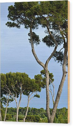 Riviera Trees Wood Print by Corinne Rhode
