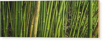 Road To Hana Bamboo Panorama - Maui Hawaii Wood Print