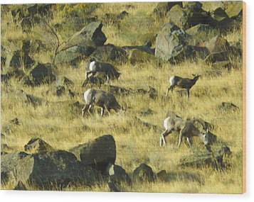 Wood Print featuring the photograph Roaming Free by Dale Stillman