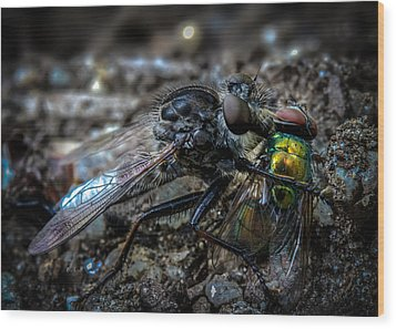 Robber Fly Eating Green Bottle Fly Wood Print by Bob Orsillo