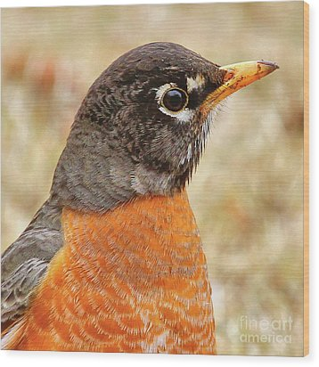 Wood Print featuring the photograph Robin by Debbie Stahre
